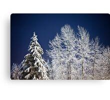 Winter Nightscape Canvas Print