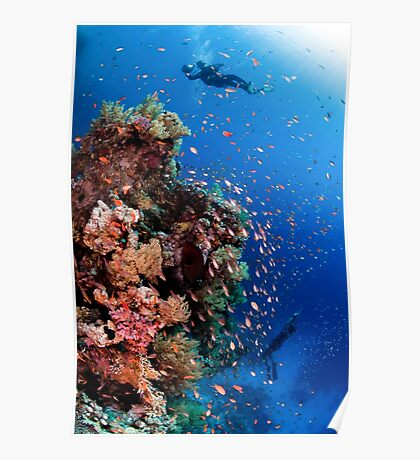 Scuba Divers pass by a coral reef photographed at Ras Mohammed  Poster