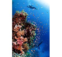 Scuba Divers pass by a coral reef photographed at Ras Mohammed  Photographic Print