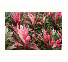 Botanic Gardens Christchurch Art Print