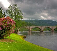 Rhododendrons by the River by Tom Gomez
