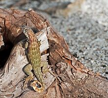 Lizard camouflage. by FER737NG