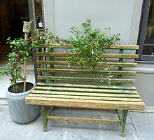 Shabby Chic Seat With Plant by Fara