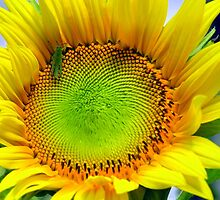 Sunny sunflower with Grasshopper by Virginia McGowan