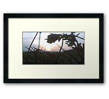 Micro Shot Framed Print