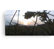 Micro Shot Canvas Print