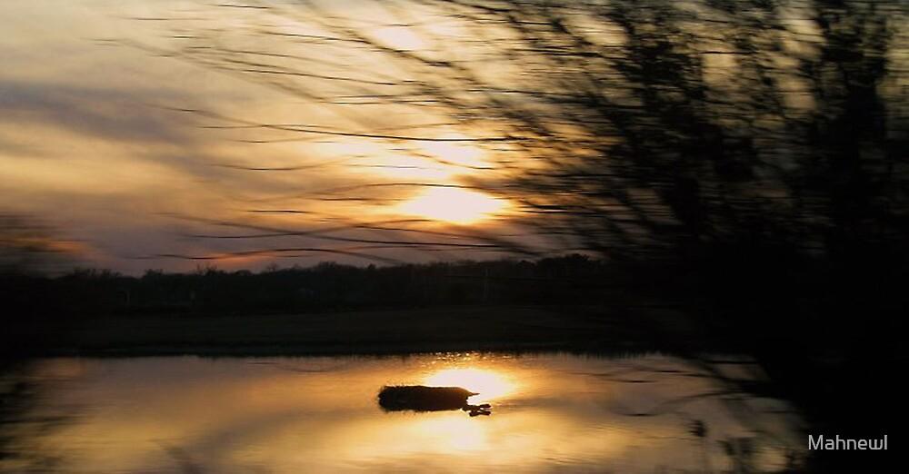 Sunlight Fiasco by Mahnewl