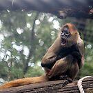 Spider Monkey by shoshanah