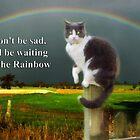 Cat Sympathy Card by Eve Parry