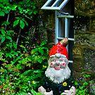 Gnome Alone by Brendan Buckley