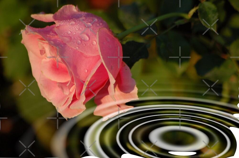 Rose above water by loiteke