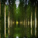 Flooded Forest  by Irene  Burdell