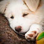 Sleepy Beauty by Wesley Hellyer
