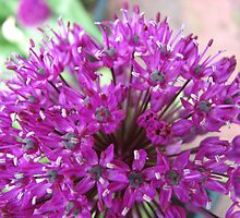 What the bee sees! Alium Supermacro by MidnightMelody