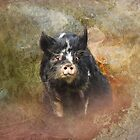 Pretty Pig by Carol Bleasdale