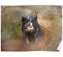 Pretty Pig Poster