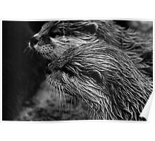 black and white otter Poster