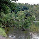 tree down  by deegarra