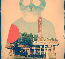 Cool Cat by Ali Gulec