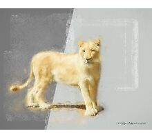 White Lioness Photographic Print