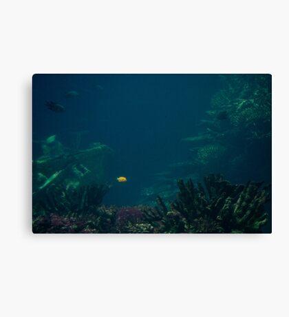 A Spot in the Ocean Canvas Print