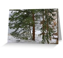 Winter by the Pond Greeting Card
