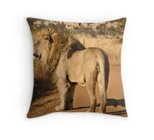 Lion walking on a road in game reserve Throw Pillow
