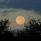 Hunter's moon in September of 2007 by jammingene