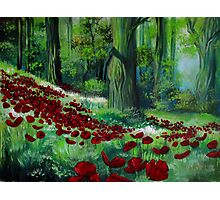 Red Poppies in the Forest Photographic Print