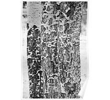 Elk Gnawed Horning Aspen Trees BW Fine Art Print Poster