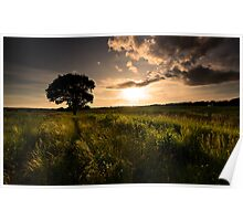 Cronton Tree..... Poster