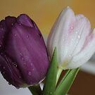 Tulips After Shower by karina5
