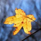 010212 004 0 oil fall leaf 2 by crescenti