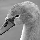 Cygnet Closer by LoveSMP