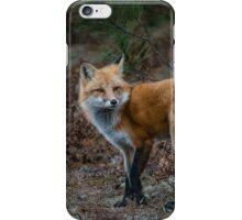 Red Fox in Algonquin Park iPhone Case/Skin