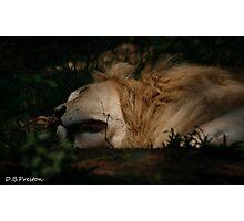 The King sleeps Photographic Print