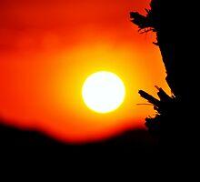 Sunstem by Saif Zahid