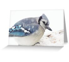 Mister Blue Greeting Card