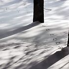 Tracks in the Snow by Debra Fedchin