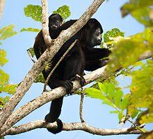 Howling Costa Rica by Robert Kelch, M.D.