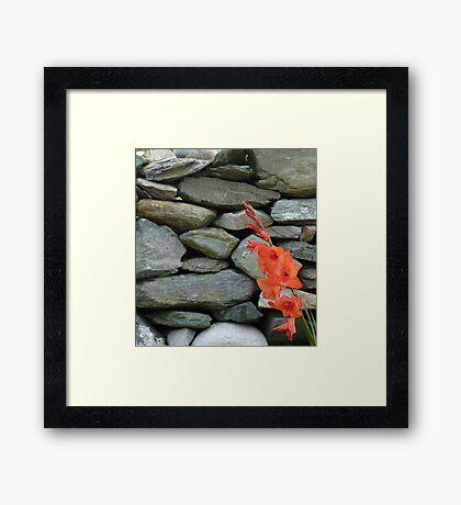Stone Wall With Gladioli Framed Print