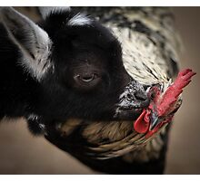 Did You Hear The One About The Goat and The Rooster? Photographic Print