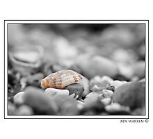 Shell amongst stones colour pop Photographic Print
