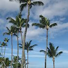 Palm trees by the beach in Maui. by MissKat77