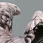 Pelican Wings by Paulette1021
