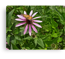 Butterfly and Bumble Bee Canvas Print