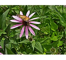 Butterfly and Bumble Bee Photographic Print