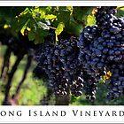 Long Island Vineyard Poster by Joanne Henig Photography