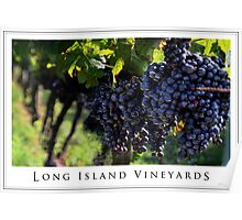 Long Island Vineyard Poster Poster