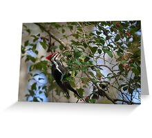 Pileated Woodpecker During South Carolina Winter Greeting Card